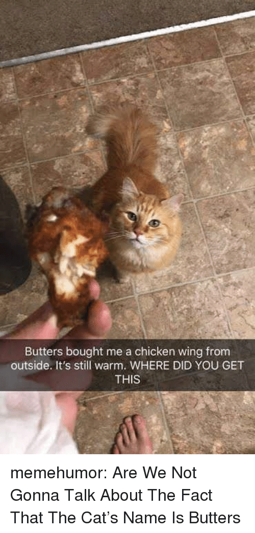 Tumblr, Blog, and Chicken: Butters bought me a chicken wing from  outside. It's still warm. WHERE DID YOU GET  THIS memehumor:  Are We Not Gonna Talk About The Fact That The Cat's Name Is Butters