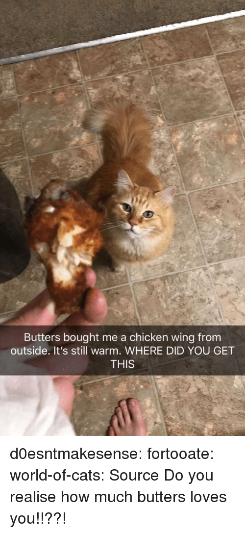 chicken wings: Butters bought me a chicken wing from  outside. It's still warm. WHERE DID YOU GET  THIS d0esntmakesense:  fortooate:  world-of-cats: Source   Do you realise how much butters loves you!!??!