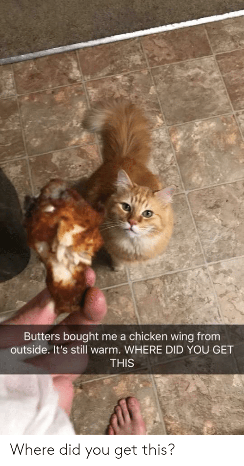 Chicken, Did, and You: Butters bought me a chicken wing from  outside. It's still warm. WHERE DID YOU GET  THIS Where did you get this?
