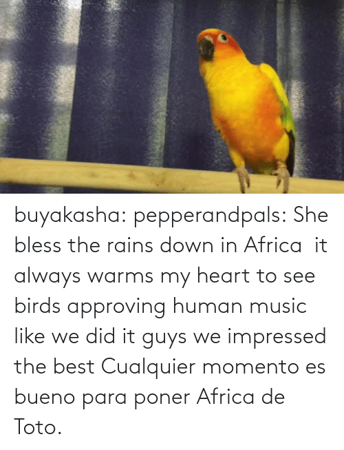 Birds: buyakasha:  pepperandpals: ‪She bless the rains down in Africa ‬ it always warms my heart to see birds approving human music like we did it guys we impressed the best  Cualquier momento es bueno para poner Africa de Toto.