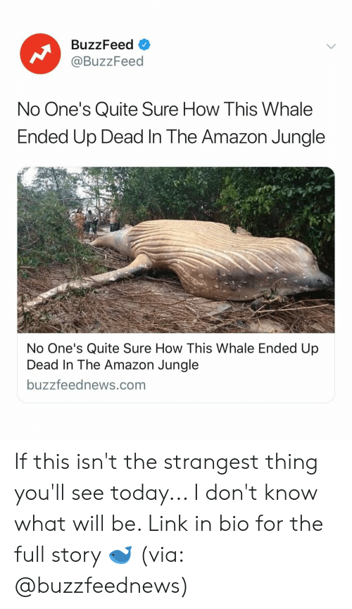 Amazon, Buzzfeed, and Link: BuzzFeed O  @BuzzFeed  No One's Quite Sure How This Whale  Ended Up Dead In The Amazon Jungle  No One's Quite Sure How This Whale Ended Up  Dead In The Amazon Jungle  buzzfeednews.com If this isn't the strangest thing you'll see today... I don't know what will be. Link in bio for the full story 🐋 (via: @buzzfeednews)