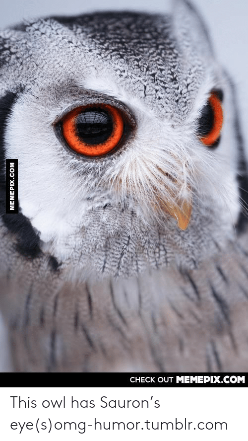 Omg, Tumblr, and Http: CНЕCK OUT MЕМЕРIХ.COM  MEMEPIX.COM This owl has Sauron's eye(s)omg-humor.tumblr.com