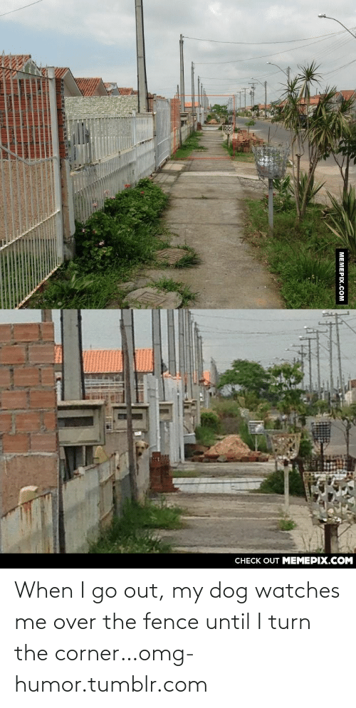 Omg, Tumblr, and Http: CНECK OUT MЕМЕРIХ.COM  МЕМЕРIХ.Сом When I go out, my dog watches me over the fence until I turn the corner…omg-humor.tumblr.com