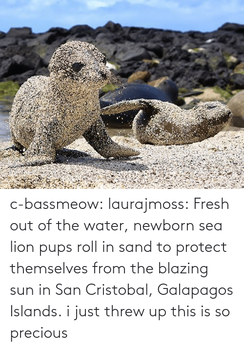 Blazing: c-bassmeow:  laurajmoss:  Fresh out of the water, newborn sea lion pupsroll in sand to protect themselves from the blazing sun in San Cristobal, Galapagos Islands.  i just threw up this is so precious