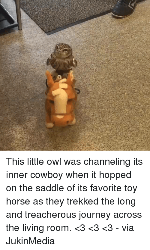 saddles: C This little owl was channeling its inner cowboy when it hopped on the saddle of its favorite toy horse as they trekked the long and treacherous journey across the living room. <3 <3 <3 - via JukinMedia