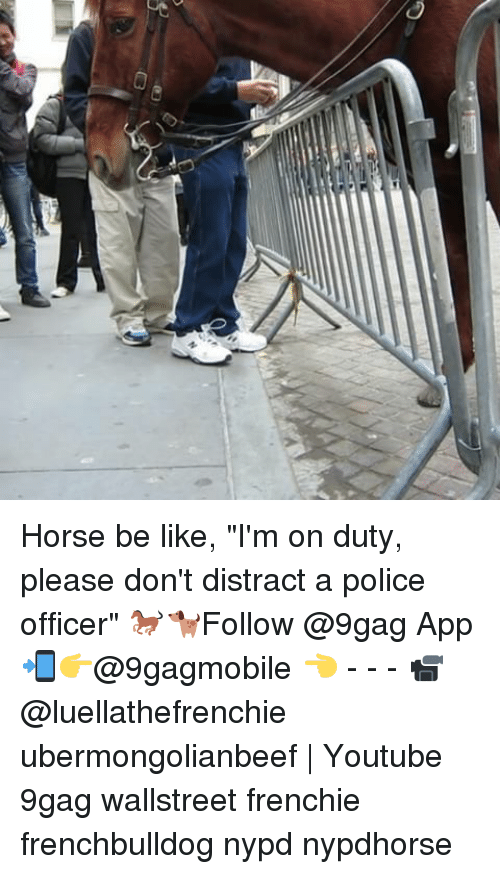 """Distracte: C3  C3 Horse be like, """"I'm on duty, please don't distract a police officer"""" 🐎🐕Follow @9gag App📲👉@9gagmobile 👈 - - - 📹@luellathefrenchie ubermongolianbeef 