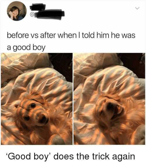 Good, Boy, and Him: Ca  before vs after when I told him he was  a good boy 'Good boy' does the trick again