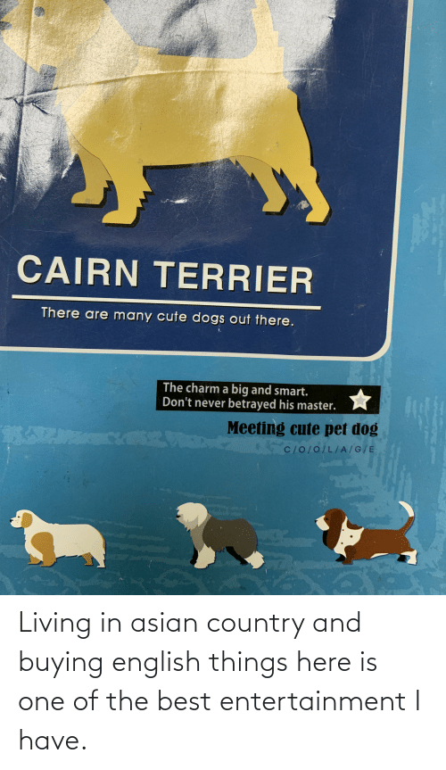 cute dogs: CAIRN TERRIER  There are many cute dogs out there.  The charm a big and smart.  Don't never betrayed his master.  Meeting cute pet dog  C/O/0/L/A/G/E Living in asian country and buying english things here is one of the best entertainment I have.