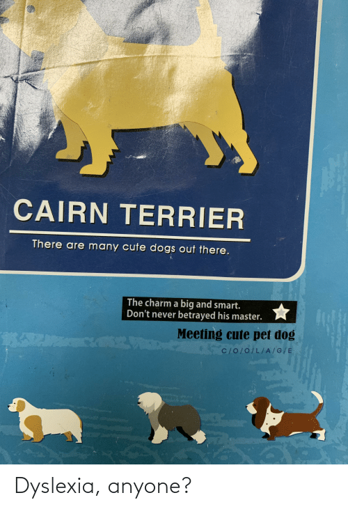 cute dogs: CAIRN TERRIER  There are many cute dogs out there.  The charm a big and smart.  Don't never betrayed his master.  Meeting cute pet dog  C/O/0/L/A/G/E Dyslexia, anyone?