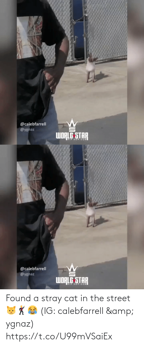 street: @calebfarrell  @ygnaz  WORLE STAR  HIP HOP. COM   @calebfarrell  @ygnaz  WORLE STAR  HIP HOP.COM Found a stray cat in the street 🐱🕺😂 (IG: calebfarrell & ygnaz) https://t.co/U99mVSaiEx