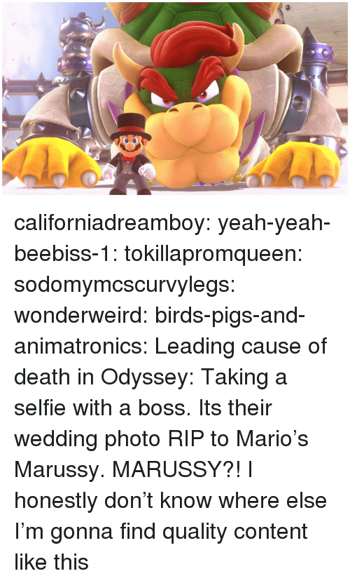 odyssey: californiadreamboy:  yeah-yeah-beebiss-1:  tokillapromqueen:  sodomymcscurvylegs:   wonderweird:  birds-pigs-and-animatronics: Leading cause of death in Odyssey: Taking a selfie with a boss. Its their wedding photo   RIP to Mario's Marussy.   MARUSSY?!     I honestly don't know where else I'm gonna find quality content like this