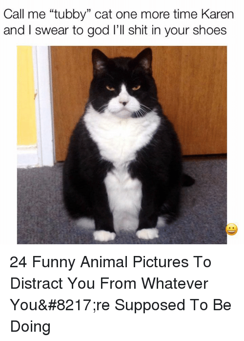 """Funny, God, and Shit: Call me """"tubby"""" cat one more time Karern  and I swear to god l'll shit in your shoes  15 24 Funny Animal Pictures To Distract You From Whatever You're Supposed To Be Doing"""