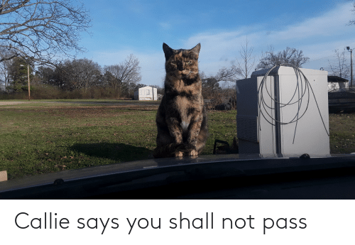 Says You: Callie says you shall not pass