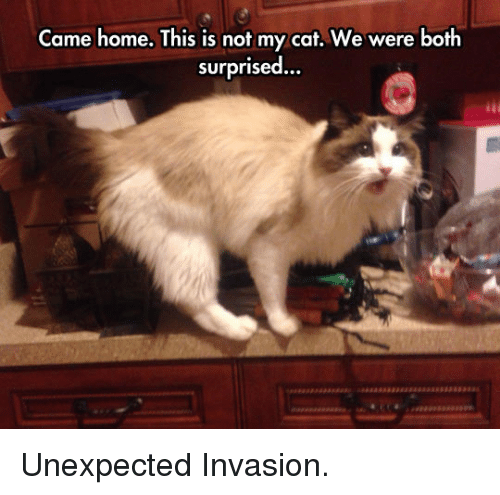 Home, Cat, and Invasion: Came home. This is not my cat. We were both  surprised... <p>Unexpected Invasion.</p>