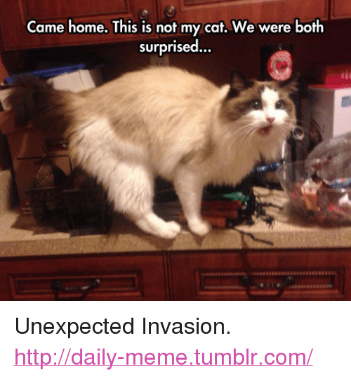 "Meme, Tumblr, and Home: Came home. This is not my cat. We were both  surprised... <p>Unexpected Invasion.<br/><a href=""http://daily-meme.tumblr.com""><span style=""color: #0000cd;""><a href=""http://daily-meme.tumblr.com/"">http://daily-meme.tumblr.com/</a></span></a></p>"