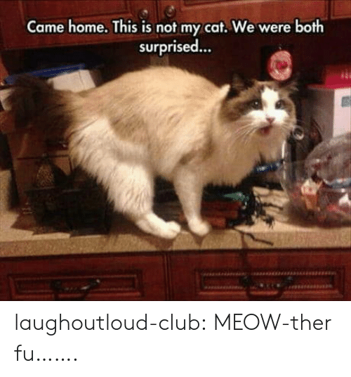 Club, Tumblr, and Blog: Came home. This is not my cat. We were both  surprised... laughoutloud-club:  MEOW-ther fu…….
