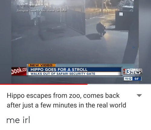 News, Safari, and The Real: CAMERA2  Zoological Center Tel Aviv- Ramat Gan Safari  NEW VIDEO|  ok.co HIPPO GOES FOR A STROLL  ACTION  NEWS  WALKS OUT OF SAFARI SECURITY GATE  HD  11:12 64  Hippo escapes from zoo, comes back  after just a few minutes in the real world me irl