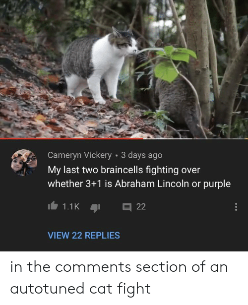cat fight: Cameryn Vickery 3 days ago  My last two braincells fighting over  whether 3+1 is Abraham Lincoln or purple  VIEW 22 REPLIES in the comments section of an autotuned cat fight