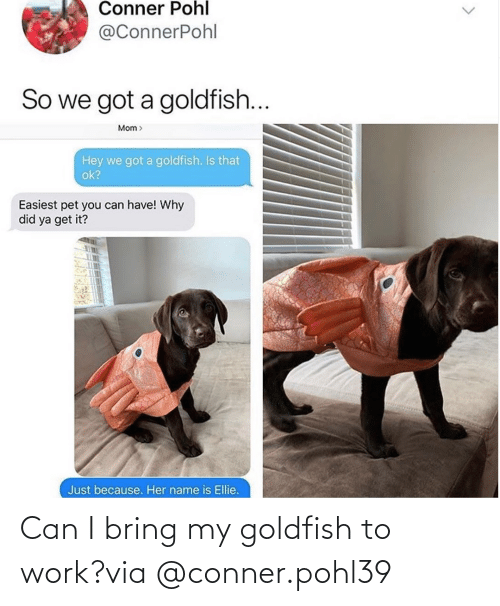 Can I: Can I bring my goldfish to work?via @conner.pohl39