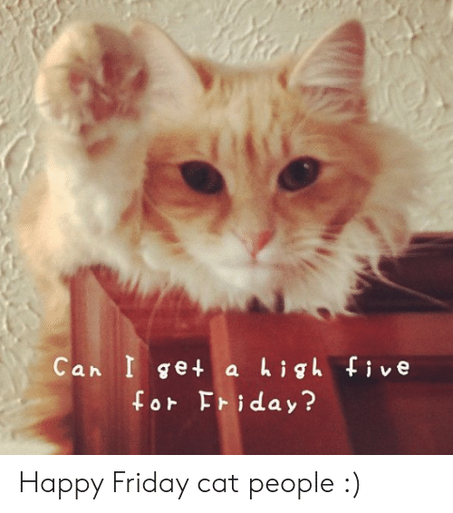 25+ Best Memes About Happy Friday Cat | Happy Friday Cat Memes