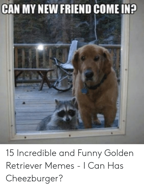 Funny, Memes, and Golden Retriever: CAN MY NEW FRIEND COME IN? 15 Incredible and Funny Golden Retriever Memes - I Can Has Cheezburger?