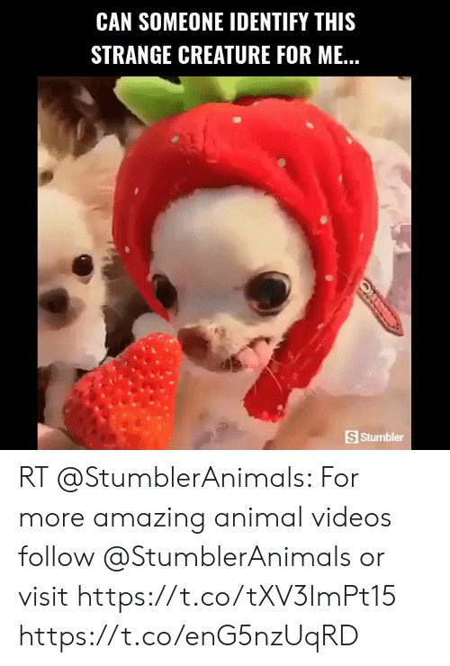 Animal Videos: CAN SOMEONE IDENTIFY THIS  STRANGE CREATURE FOR ME...  S Stumbler RT @StumblerAnimals: For more amazing animal videos follow @StumblerAnimals or visit https://t.co/tXV3ImPt15 https://t.co/enG5nzUqRD