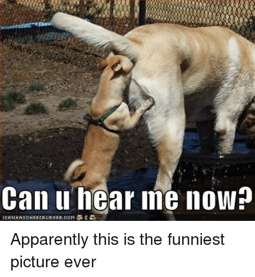 25 best memes about funniest picture ever funniest picture