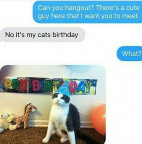 Birthday, Cats, and Cute: Can you hangout? There's a cute  guy here that I want you to meet.  No it's my cats birthday  What?  PPY BRTADAY