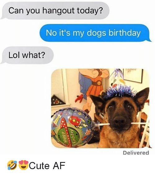 Af, Birthday, and Dogs: Can you hangout today?  No it's my dogs birthday  Lol what?  Delivered 🤣😍Cute AF