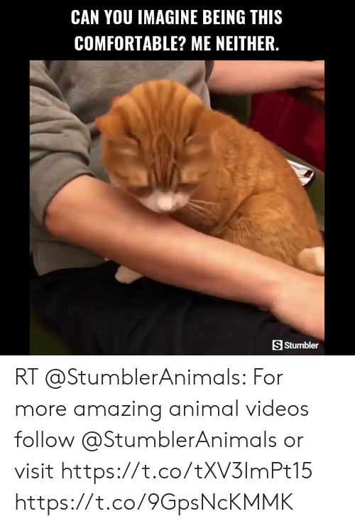 Animal Videos: CAN YOU IMAGINE BEING THIS  COMFORTABLE? ME NEITHER.  S Stumbler RT @StumblerAnimals: For more amazing animal videos follow @StumblerAnimals or visit https://t.co/tXV3ImPt15 https://t.co/9GpsNcKMMK