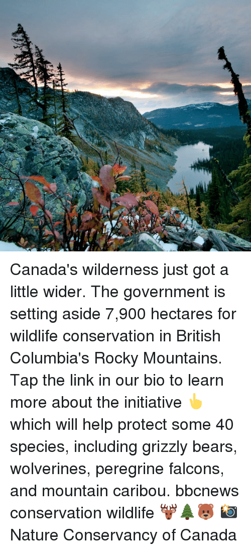 Memes, Rocky, and Bears: Canada's wilderness just got a little wider. The government is setting aside 7,900 hectares for wildlife conservation in British Columbia's Rocky Mountains. Tap the link in our bio to learn more about the initiative 👆which will help protect some 40 species, including grizzly bears, wolverines, peregrine falcons, and mountain caribou. bbcnews conservation wildlife 🦌🌲🐻 📸 Nature Conservancy of Canada