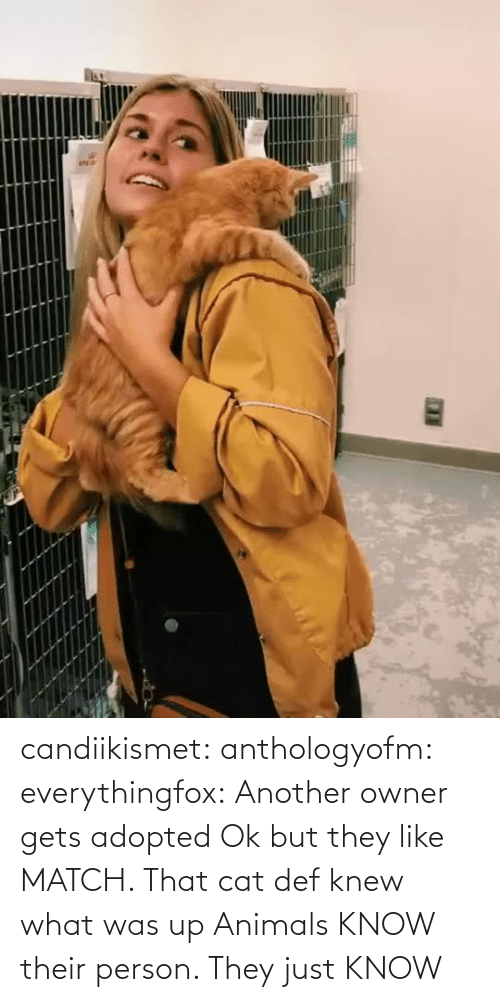Match: candiikismet:  anthologyofm:  everythingfox:   Another owner gets adopted  Ok but they like MATCH. That cat def knew what was up   Animals KNOW their person. They just KNOW