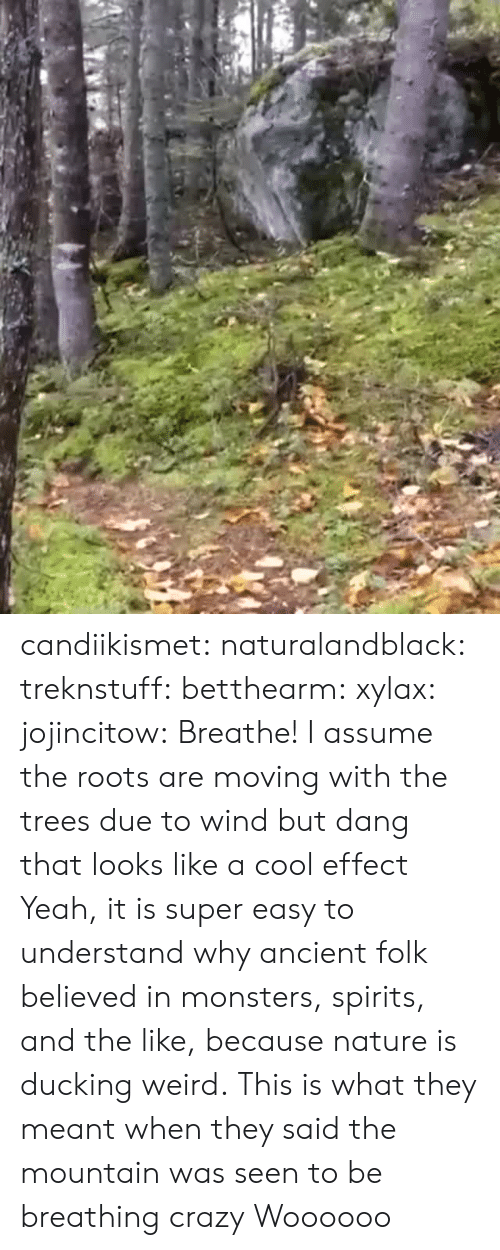 Crazy, Target, and Tumblr: candiikismet: naturalandblack:   treknstuff:  betthearm:  xylax:  jojincitow: Breathe! I assume the roots are moving with the trees due to wind but dang that looks like a cool effect   Yeah, it is super easy to understand why ancient folk believed in monsters, spirits, and the like, because nature is ducking weird.  This is what they meant when they said the mountain was seen to be breathing  crazy   Woooooo