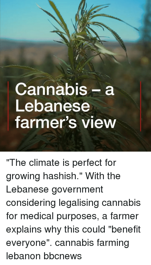 """Farming: Cannabis- a  Lebanese  farmer's view """"The climate is perfect for growing hashish."""" With the Lebanese government considering legalising cannabis for medical purposes, a farmer explains why this could """"benefit everyone"""". cannabis farming lebanon bbcnews"""
