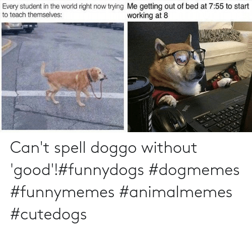 Cant: Can't spell doggo without 'good'!#funnydogs #dogmemes #funnymemes #animalmemes #cutedogs