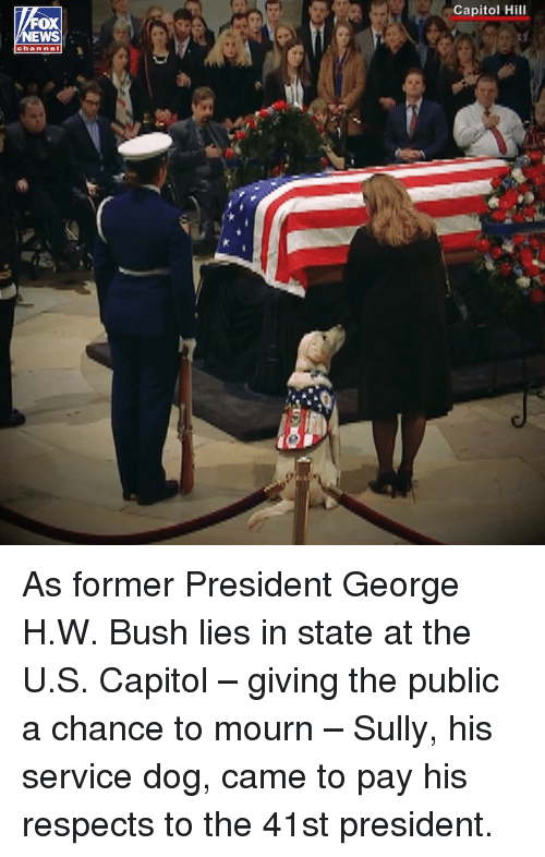 George H. W. Bush: Capitol Hill  OX  EWS  channel As former President George H.W. Bush lies in state at the U.S. Capitol – giving the public a chance to mourn – Sully, his service dog, came to pay his respects to the 41st president.