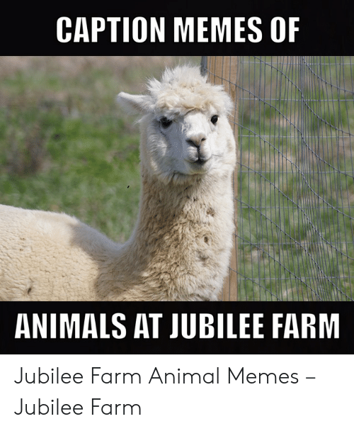 🐣 25 Best Memes About Guess the Animal