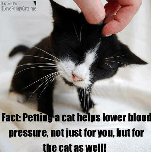 Captions By Ilove Funny Catsme Fact Pettinga Cat Helps Lower Blood