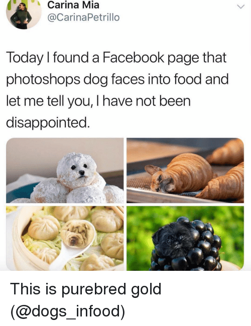 Disappointed, Dogs, and Facebook: Carina Mia  @CarinaPetrillo  Today I found a Facebook page that  photoshops dog faces into food and  let me tell you, I have not been  disappointed This is purebred gold (@dogs_infood)