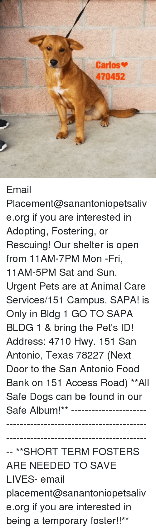 Dogs, Food, and Memes: Carlos  470452 Email Placement@sanantoniopetsalive.org if you are interested in Adopting, Fostering, or Rescuing!  Our shelter is open from 11AM-7PM Mon -Fri, 11AM-5PM Sat and Sun.  Urgent Pets are at Animal Care Services/151 Campus. SAPA! is Only in Bldg 1 GO TO SAPA BLDG 1 & bring the Pet's ID! Address: 4710 Hwy. 151 San Antonio, Texas 78227 (Next Door to the San Antonio Food Bank on 151 Access Road)  **All Safe Dogs can be found in our Safe Album!** ---------------------------------------------------------------------------------------------------------- **SHORT TERM FOSTERS ARE NEEDED TO SAVE LIVES- email placement@sanantoniopetsalive.org if you are interested in being a temporary foster!!**