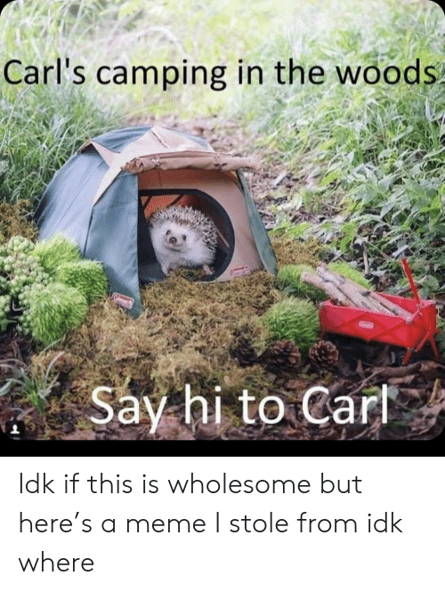 in the woods: Carl's camping in the woods  Say hi to Cart Idk if this is wholesome but here's a meme I stole from idk where