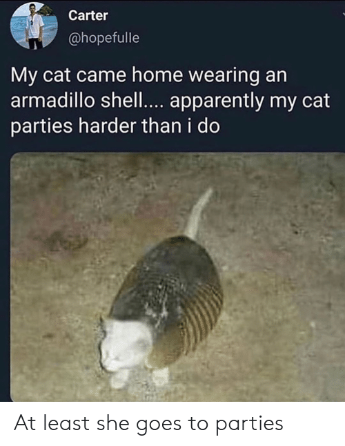 Harder: Carter  @hopefulle  My cat came home wearing an  armadillo shell.... apparently my cat  parties harder than i do At least she goes to parties