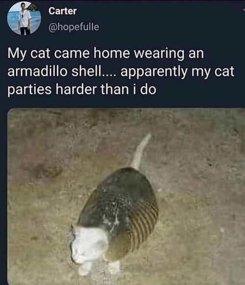 Harder: Carter  @hopefulle  My cat came home wearing an  armadillo shell.... apparently my cat  parties harder than i do