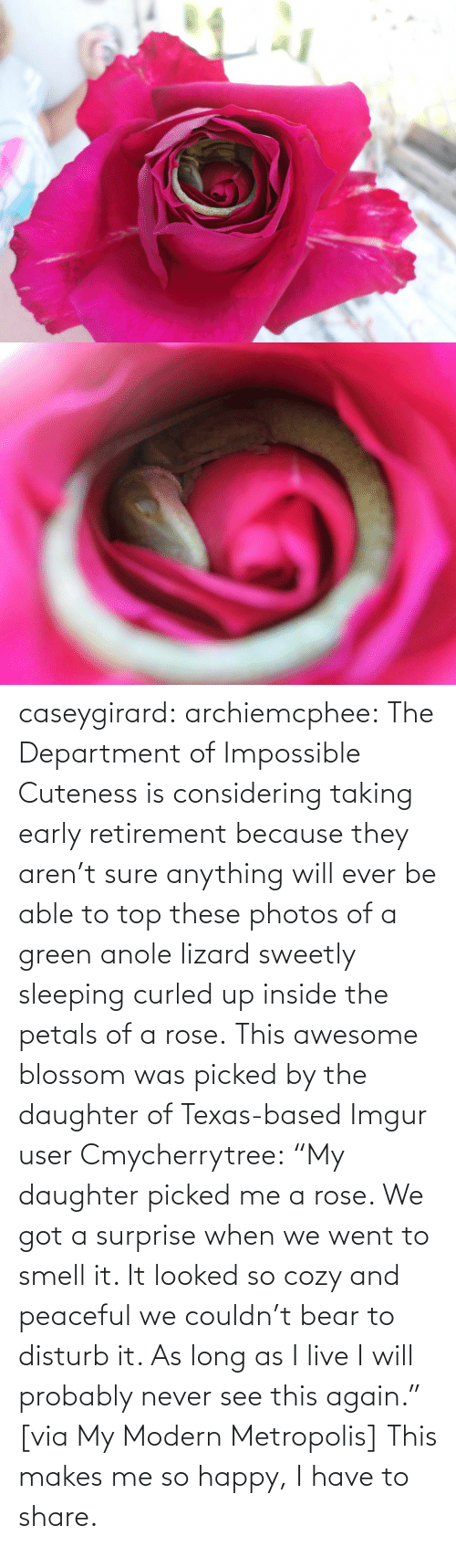 "Wiki: caseygirard:  archiemcphee:   The Department of Impossible Cuteness is considering taking early retirement because they aren't sure anything will ever be able to top these photos of a green anole lizard sweetly sleeping curled up inside the petals of a rose. This awesome blossom was picked by the daughter of Texas-based Imgur user Cmycherrytree: ""My daughter picked me a rose. We got a surprise when we went to smell it. It looked so cozy and peaceful we couldn't bear to disturb it. As long as I live I will probably never see this again."" [via My Modern Metropolis]   This makes me so happy, I have to share."