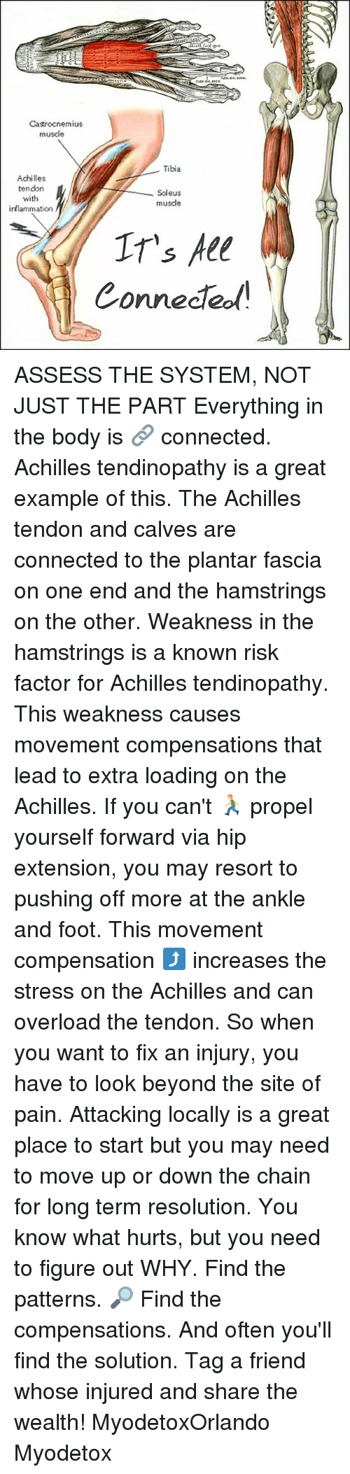 propeller: Castrocnemius  musde  Tibia  Achilles  tendon  Soleus  with  muscle  inflammation  IT's All  Connected ASSESS THE SYSTEM, NOT JUST THE PART Everything in the body is 🔗 connected. Achilles tendinopathy is a great example of this. The Achilles tendon and calves are connected to the plantar fascia on one end and the hamstrings on the other. Weakness in the hamstrings is a known risk factor for Achilles tendinopathy. This weakness causes movement compensations that lead to extra loading on the Achilles. If you can't 🏃 propel yourself forward via hip extension, you may resort to pushing off more at the ankle and foot. This movement compensation ⤴ increases the stress on the Achilles and can overload the tendon. So when you want to fix an injury, you have to look beyond the site of pain. Attacking locally is a great place to start but you may need to move up or down the chain for long term resolution. You know what hurts, but you need to figure out WHY. Find the patterns. 🔎 Find the compensations. And often you'll find the solution. Tag a friend whose injured and share the wealth! MyodetoxOrlando Myodetox