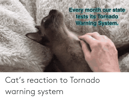 system: Cat's reaction to Tornado warning system