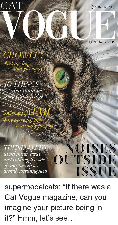 """Smell, Tumblr, and Weird: CAT  $10 IN TREATS  FEBRUARY 2019  QIL  And the bug  CROWLEY  that got audy  10 THINGS  at couldbe  fridge  You've  gotMAIL  Why every package  is actually for you  NOISES  TREND  weird smell, boxes  and rubbing the side  oT your mouth on  literally anything new  OUTSID  ISSUR supermodelcats:  """"If there was a Cat Vogue magazine, can you imagine your picture being in it?"""" Hmm, let's see…"""