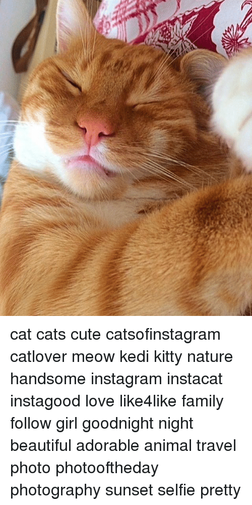Meowe: cat cats cute catsofinstagram catlover meow kedi kitty nature handsome instagram instacat instagood love like4like family follow girl goodnight night beautiful adorable animal travel photo photooftheday photography sunset selfie pretty