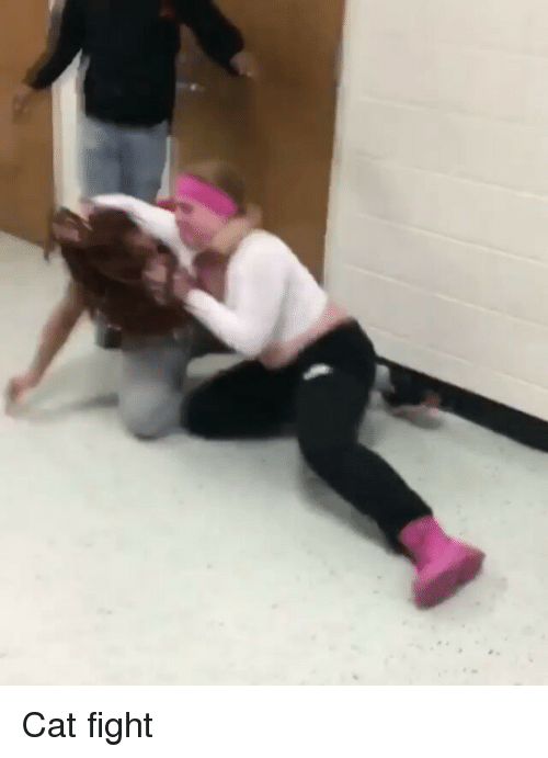 cat fight: Cat fight
