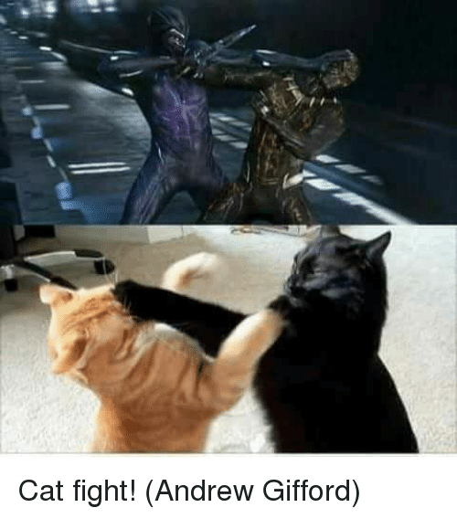 cat fight: Cat fight!  (Andrew Gifford)